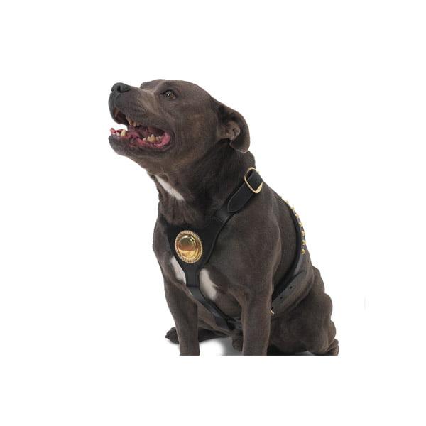 Leather Bull Terrier Harness Black