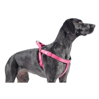 Nylon Padded Raspberry Harness