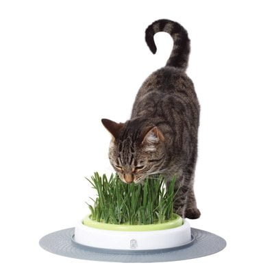 Catit Senses Grass Garden Kit