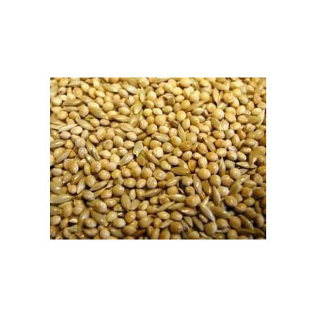 Best Budgie Seed Mix