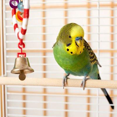 Cage Birds