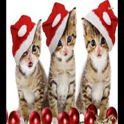 Christmas For Cats