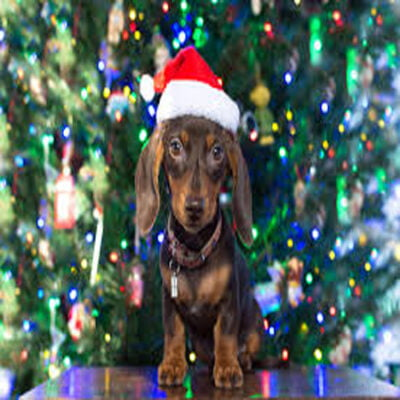 Christmas For Dogs